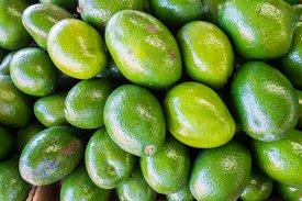 Avocado aus Florida