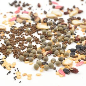 Sisymbrium Sp. Seeds (dried)